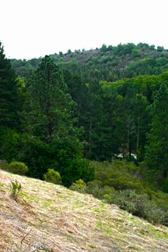 Nimitz Way Trail at Inspiration Point, Berkeley, California Free parking