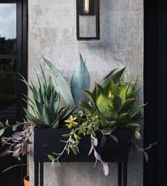 DIY planter box is a simple but effective medium to display your favorite plants. Here are some ideas you can try for your own garden or home. Indoor Vegetable Gardening, Indoor Garden, Container Gardening, Indoor Plants, Outdoor Gardens, Indoor Cactus, Succulents Garden, Planting Flowers, Modern Farmhouse Porch