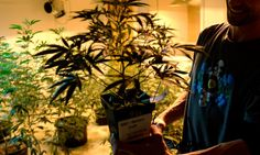 Another record for the state's so-called marijuana experiment: Nearly $2.6 million was raised for school construction capital in March via the excise tax on wholesale marijuana transfers. The monthly excise taxes earmarked for schools never topped $2 million in 2014, the first year of recreational pot sales in Colorado or anywhere else — but they've raised more than $7 million in the first three months of 2015 already.