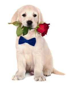 """""""I picked this just for you""""...found on fundogpics.com  Click on this image to…"""