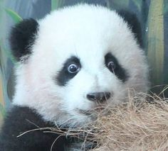Mei Huan shows off the Googly Eyes: #ZAFanFriday submission from Facebook user Robert H.