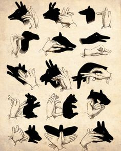 Can you recognize all those animals created by your hands and light?