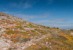 West Coast National Park in Western Cape. Just inland from the secluded harbour of Saldanha Bay one finds the azure waters of the Langebaan Lagoon, . Beach Villa, North Beach, Game Reserve, Windsurfing, Nature Reserve, West Coast, Wild Flowers, Places To See, South Africa