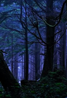 Rainforest Night Magic by Fort Photo