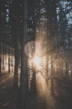 Geist weht Wald Fotografie Ideen inspiredluv (4)