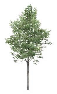 árboles png - Ecosia