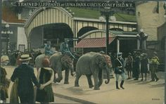 Trained Elephants at Luna Park Circus, Coney Island, NY. (vintage, animals)