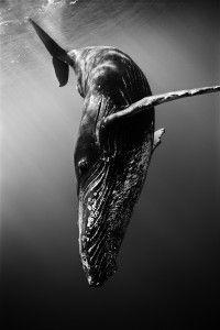 I always dream of deep water