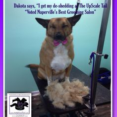 The UpScale Tail, Pet Grooming Salon www.theupscaletail.com