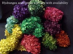 Bulk Case of 5 colored Preserved Hydrangeas for Wedding Floral and more.