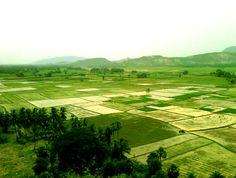 Rice Fields Vista. #travel #cambodia #countryside