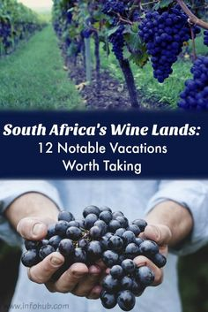 Wine Tours in South Africa: If you're fed up with ordinary food and seek new culinary experiences, take some of our food trips to explore traditional meals of other cultures, taste wines, and meet the people who lovingly make them. Best Places To Eat, Africa Travel, Amazing Destinations, Travel Destinations, Travel Images, Foodie Travel, Wine Tasting, Wine Recipes, Adventure Travel