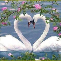 Two love birds so cute !!!!!