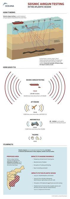 Seismic Airgun Testing Infographic