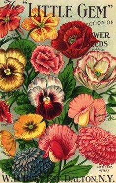 Vintage Little Gem Flower Seed Packet Art