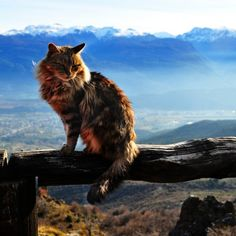 Tips For Training Your Cat - Cat's Nine Lives I Love Cats, Cute Cats, Cats Outside, Adventure Cat, Cat Attack, Cat Pose, Cat Boarding, Cat Photography, Cat Sleeping