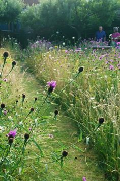 How to create a beautiful mini meadow garden – The Middle-Sized Garden Comment créer un beau mini jardin de prairie … Meadow Garden, Garden Cottage, Dream Garden, How To Garden, Prairie Garden, Wild Flower Meadow, Wild Flowers, Wild Flower Gardens, Meadow Flowers