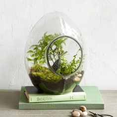 All-Glass Terrarium, $67.80-90.78 CAD, West Elm