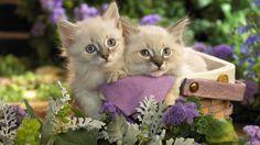 nice Cats Pets wallpaper