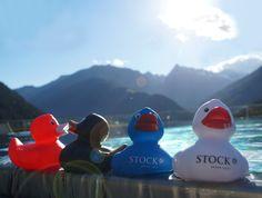 STOCK Badeenten in Action; Zillertal, Tirol, Österreich