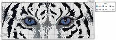 Tigris szem