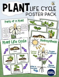 Subscribe to our newsletter and get this FREE plant life cycle anchor chart poster pack. Ideal for 1st, 2nd, and 3rd grade teachers for students learning about parts of a plant and photosynthesis. An ideal addition to your life science lessons and bulletin boards.