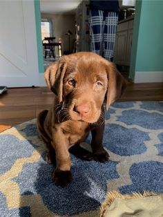 Dog And Puppies Memes .Dog And Puppies Memes Super Cute Puppies, Cute Dogs And Puppies, I Love Dogs, Doggies, Cute Dogs Breeds, Cutest Dogs, Babies With Dogs, Puppies Puppies, Best Dog Breeds