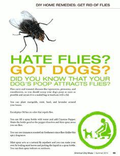 Flies on poop
