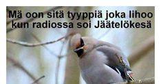 Introvert, Live Life, Finland, Jokes, Birds, Smile, Humor, 6 Packs, Husky Jokes