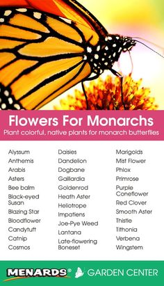 Plant colorful, native plants for monarch butterflies! Plant colorful, native plants for monarch but Butterfly Garden Plants, Butterfly Feeder, Planting Flowers, Flowers Garden, Spring Flowers, Hummingbird Garden, Monarch Butterfly, Diy Butterfly, Butterfly House