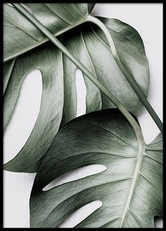 Here you will find floral prints and posters. Stylish posters with botanical prints of colorful plants. Buy botanical posters online from Desenio. Poster Mural, Poster Prints, Cactus Poster, Poster Xxl, Desenio Posters, Poster Photo, Gold Poster, Images Murales, New York Poster