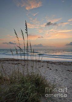 Ein schöner Sonnenaufgang am Melbourne-Strand, Florida - take me to the beach - Travel Beautiful Sunrise, Beautiful Beaches, Melbourne Beach, Ocean Beach, Beach Sunrise, Sunrise Florida, Seaside Florida, Nature Beach, Florida Travel