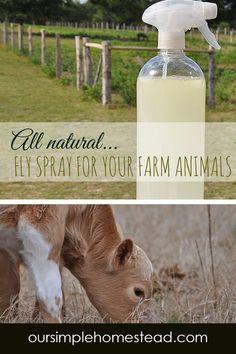 Raising Farm Animals, Raising Goats, Raising Chickens, Homemade Fly Spray, Goat Care, Hobby Farms, Horse Care, Chickens Backyard, Livestock