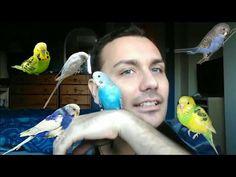 Animais - YouTube