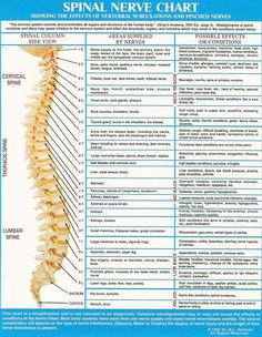 spine-nerves-diagram-anatomy-nerve-chart.jpg (1000×1291)