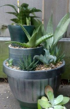 Triple planter. Three pots, painted three ways, and filled with shade loving succulents - agaves, haworthias, and sanseverias.