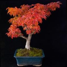 List of exotic indoor plants with images, descriptions, advices and other useful information. Types Of Plants, Plant Care, Indoor Plants, Bonsai, Garden, Flowers, Deck, Image, Bonsai Trees