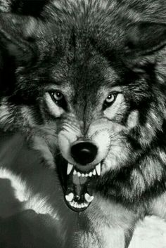 Wolf's Anger.!