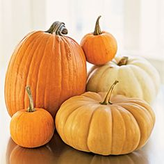 Fall Produce Guide | Pumpkins | CookingLight.com. A staple for autumn festivities, the pumpkin makes its way into a multitude of dishes this time of year. Enjoy this versatile squash while it's fresh— the flavor is vastly superior to canned.