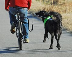 8 Tips To Get Your Dog Used To Biking -- Biking with your dog can be a great way to exercise those high-energy pups that can outrun you (either speed or distance). It can also be dangerous for both of you if not done properly.
