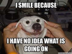 smile meme   my owner forced me to smile now I can't stop smiling Oct 14 20:55 UTC ...