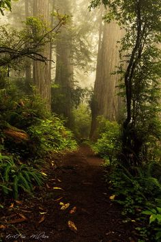 Enchanted Forest - Tumblr ( musical inspiration )