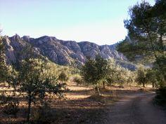 Vistes des dels camps d'olivers d' El Bruc de la muntanya de Montserrat