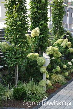 Garden Entrance, Garden Gates, Modern Landscaping, Outdoor Landscaping, Back Gardens, Outdoor Gardens, Small Cottage Garden Ideas, Garden Landscape Design, White Gardens
