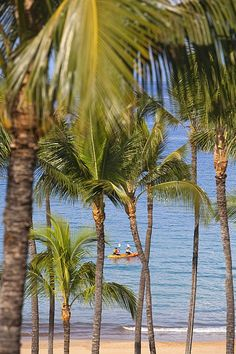 Kayakers through Palms