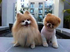 Poms - I like somewhere in between the 2 though.  The teddy bear pom on the right is almost scary, the one on the left so hairy!  lol