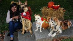 Halloween dog costumes. Such cute costumes! Remember for Charlee for this year.