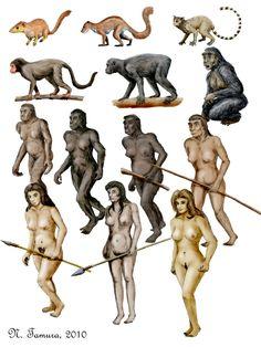 Form left to right and top to bottom, Purgatorius, Plesiadapis, Necrolemur, Aegyptopithecus, Proconsul, Sahelanthropus, Ardipithecus, Australopithecus afarensis, Homo habilis, Homo erectus, Homo heidelbergensis, Homo sapiens, Homo sapiens sapiens.