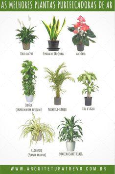 Eco Garden, Home And Garden, Landscape Architecture, Landscape Design, Garden Design, Little Plants, Green Life, Botany, Beautiful Gardens