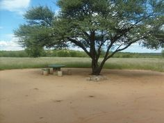 Kamanjab Rest Camp just outside Kamanjab. Zimbabwe, Campsite, Great Places, The Outsiders, Photo Galleries, Scenery, Rest, Gallery, Plants
